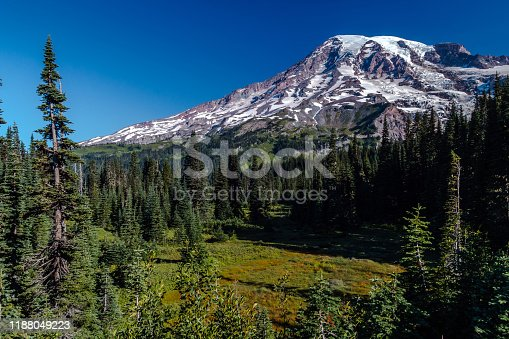 Grass and trees in foreground present majestic Mount Rainier