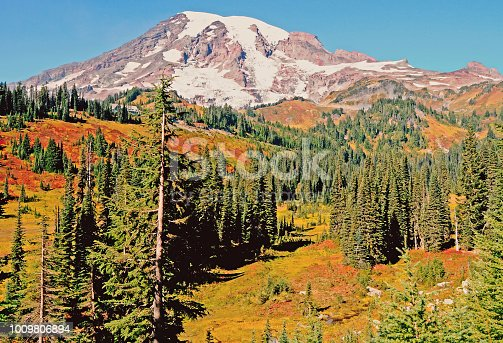 Mt Rainier viewed from a high meadow filled with fall colors of reds and yellows with a few fir trees and a clear blue sky