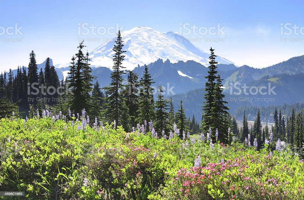 Mt. Rainier in Summer royalty-free stock photo