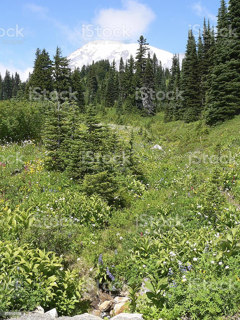 Mt. Rainier Meadow royalty-free stock photo