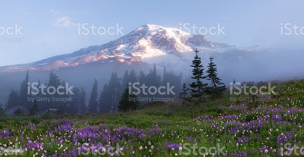 Mt Rainier on Foggy Morning stock photo