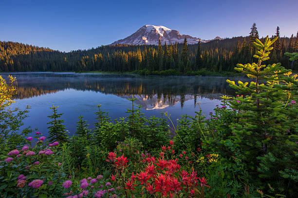Mt Rainier Reflected in Reflection Lake stock photo