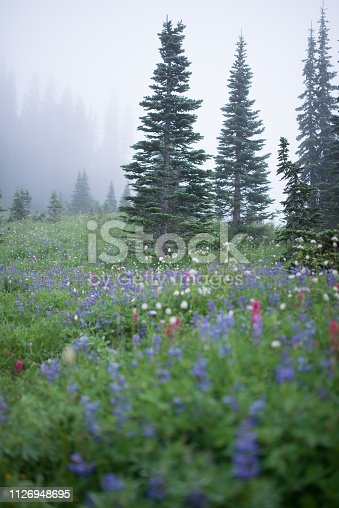 Tree, Mountain, Mt Rainier, USA, Washington State