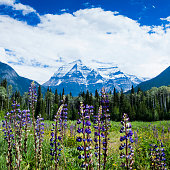 Mt Robson in the Canadian Rocky Mountains of British Columbia, Canada