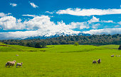 istock Mt. Ruapehu and fields 892801086