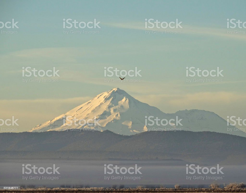 Mt. Shasta Golden Eagle stock photo