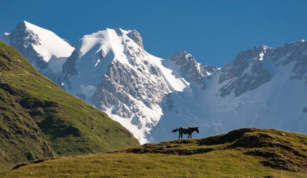 Mt Shkhara, Georgia Caucasus, from Ushguli stock photo