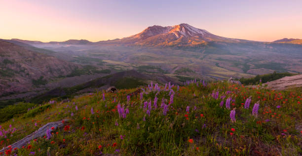 Mt St Helens at Sunrise - foto stock