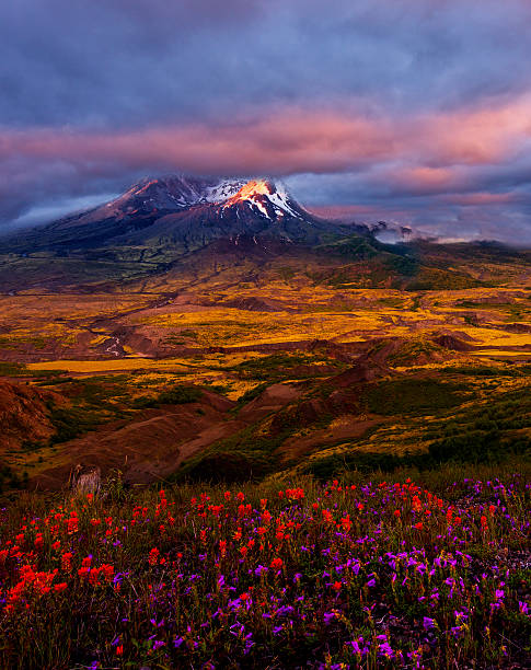 Mt St Helens at Sunset stock photo