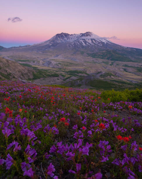 Mt St Helens at Sunset - foto stock