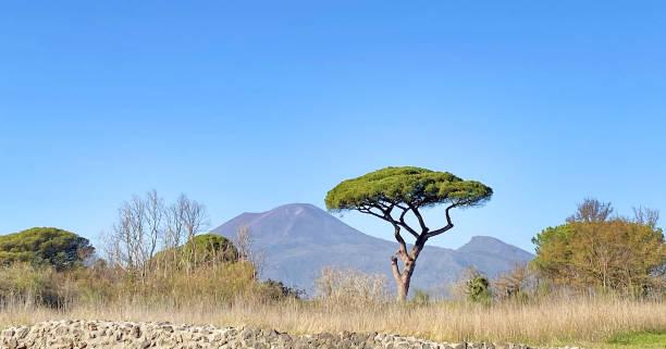 Vesuv und Baum in Pompeji – Foto