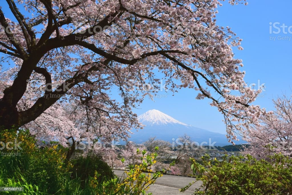 Fujisan und Kirsche Baum Lizenzfreies stock-foto
