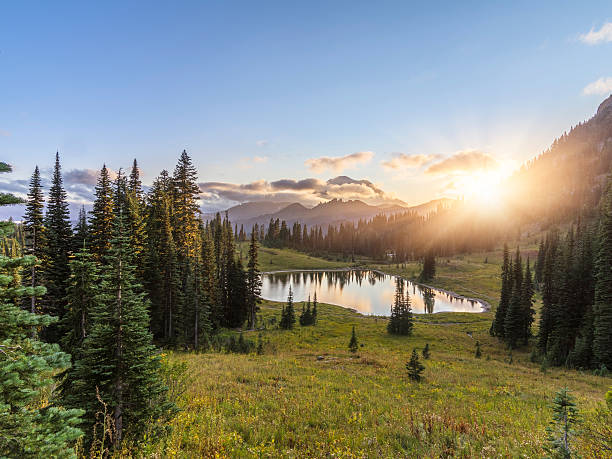 MT.Rainier in sunset MT.Rainier National Park, WA, USA. washington state stock pictures, royalty-free photos & images