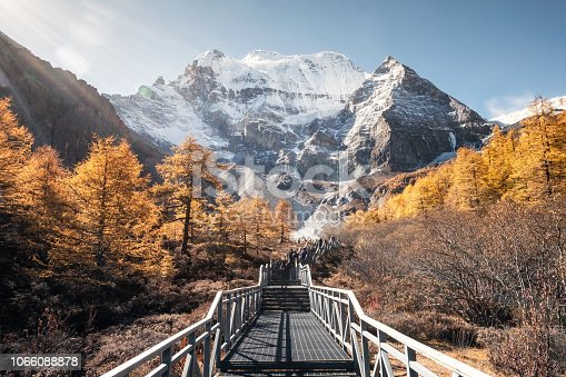 Mt.Xiannairi with golden pine forest on peak in autumn. Yading nature reserve, Daocheng, China