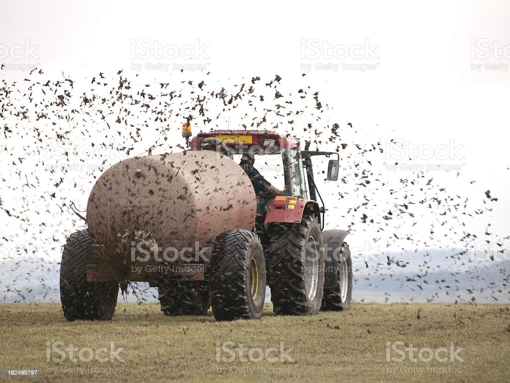 Muck Spreading stock photo
