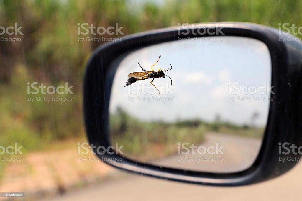 Vespa vasaio in piedi sul noleggio finestra - foto stock
