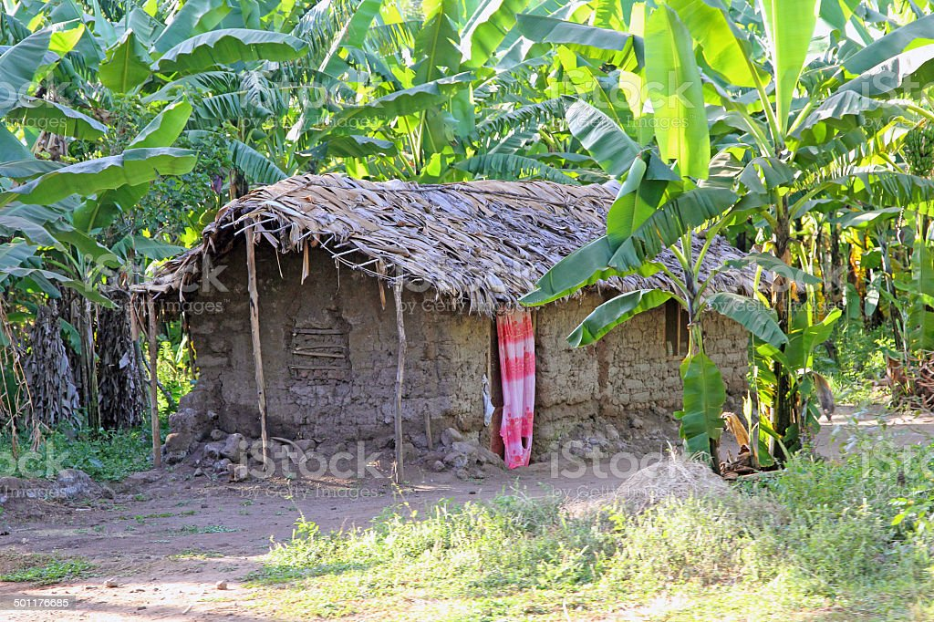 Mud hut in a tropical forest stock photo