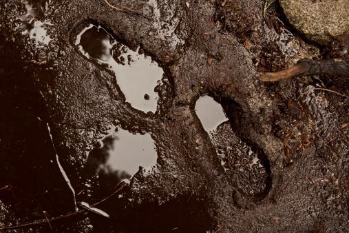Footprints in the mud.