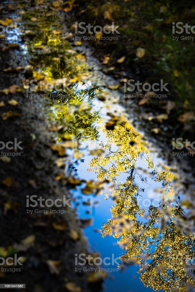 Mud Puddle Autumn Reflection stock photo