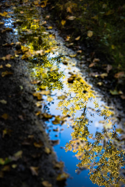 Mud Puddle Autumn Reflection stock photo