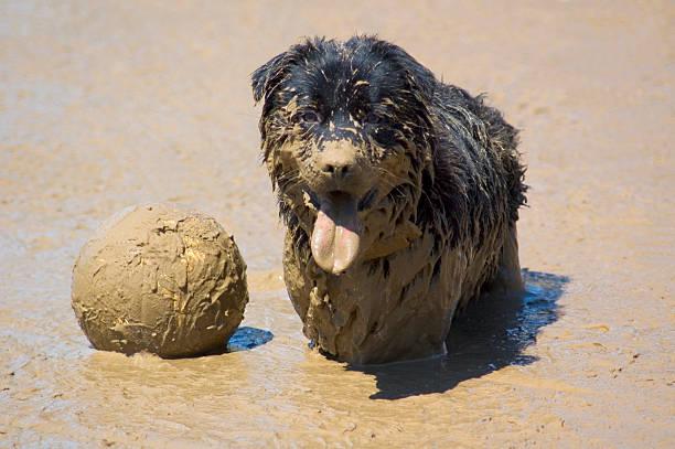 Mud Vollyball stock photo
