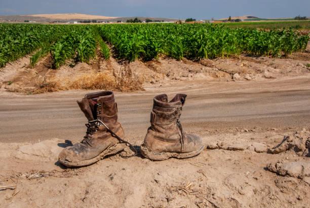 Modderige laarzen in de buurt van een Midden-seizoen maïsveld foto