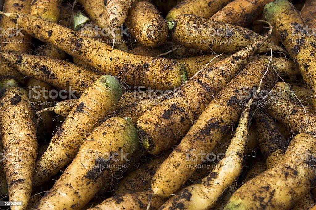 Muddy carrots royalty-free stock photo