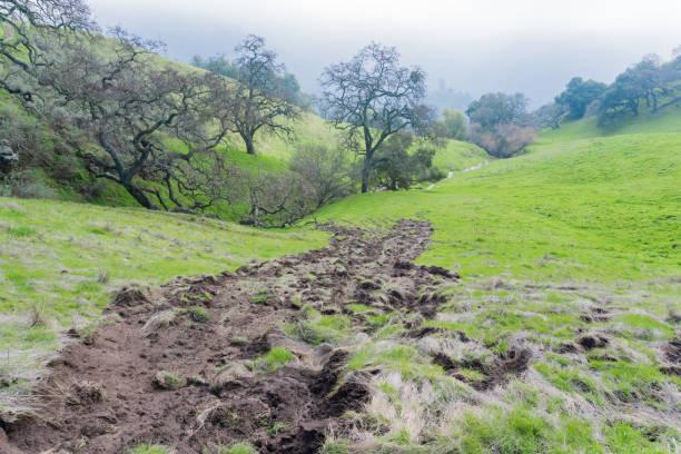 muddy creek und tal oaks, sierra vista open space zu bewahren, kalifornien - süd kalifornien stock-fotos und bilder