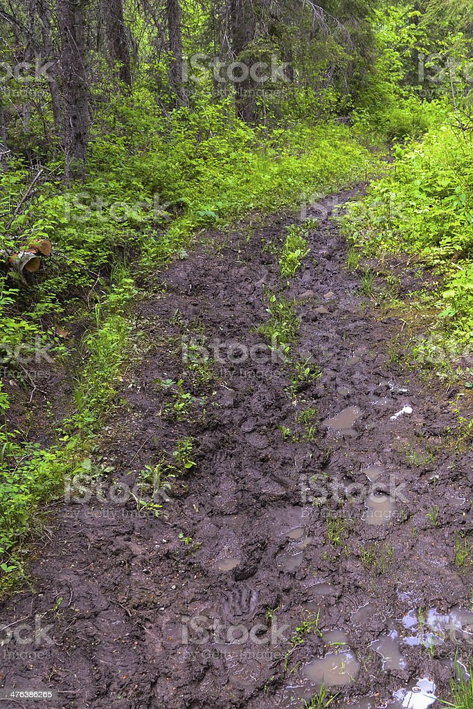 Muddy Day on The Trail royalty-free stock photo