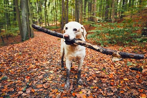 Muddy dog in autumn nature