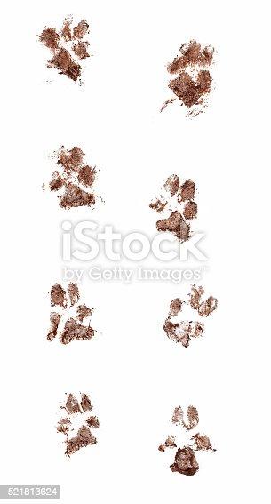 istock Muddy Dog Paw Prints 521813624