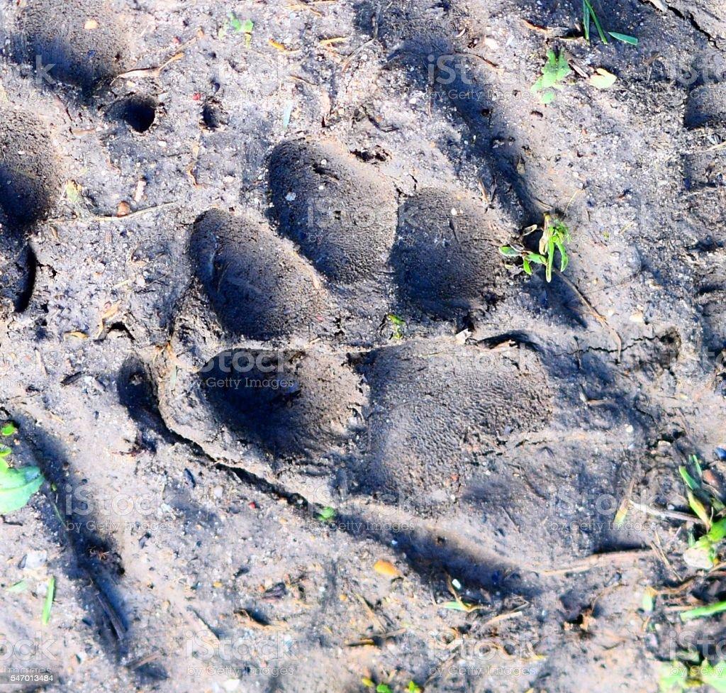 muddy dogs paw print wet soil impression background stock photo