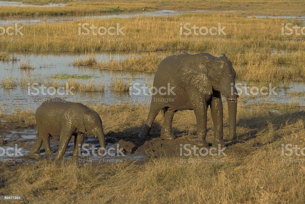 Muddy Elefanten Lizenzfreies stock-foto