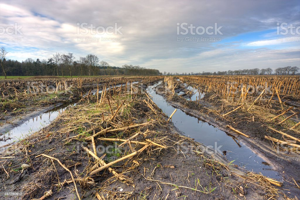 Muddy field stock photo