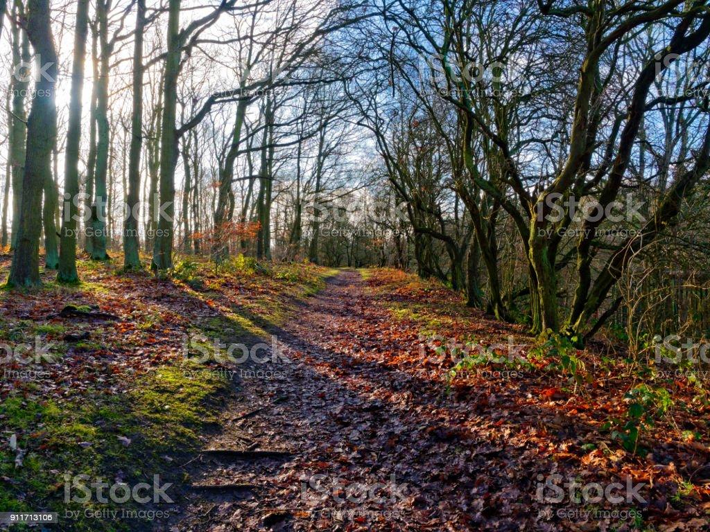 Muddy footpath through the trees stock photo