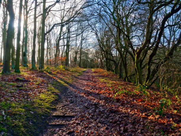 sentier boueux à travers les arbres - arbre à feuilles caduques photos et images de collection