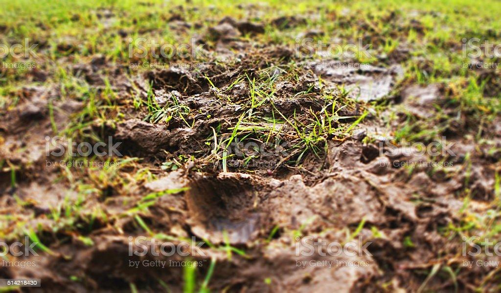 Muddy grass stock photo