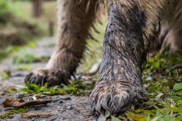 Muddy Paws – zdjęcie