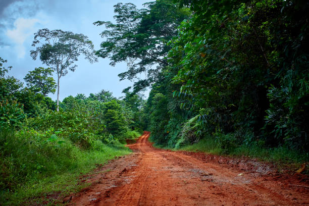 Muddy road in the rainforest of central America. stock photo