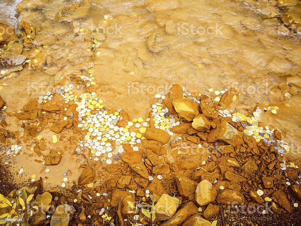 Muddy stream with yellow aspen leaves royalty-free stock photo