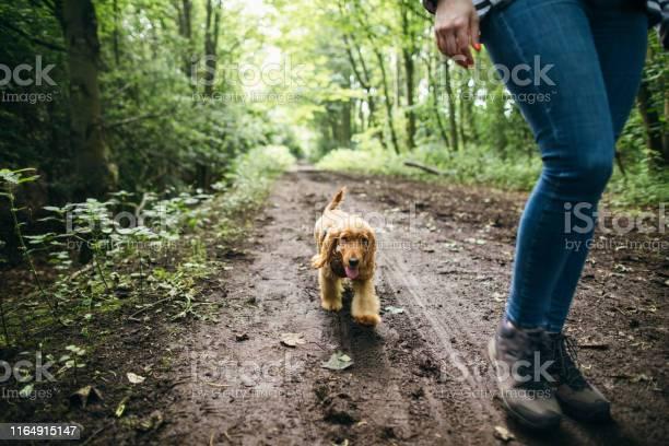 Muddy walk in the forest picture id1164915147?b=1&k=6&m=1164915147&s=612x612&h=avgnpiq5myxf1maqkls557la1jfpzmxrgz7hqdugjzo=