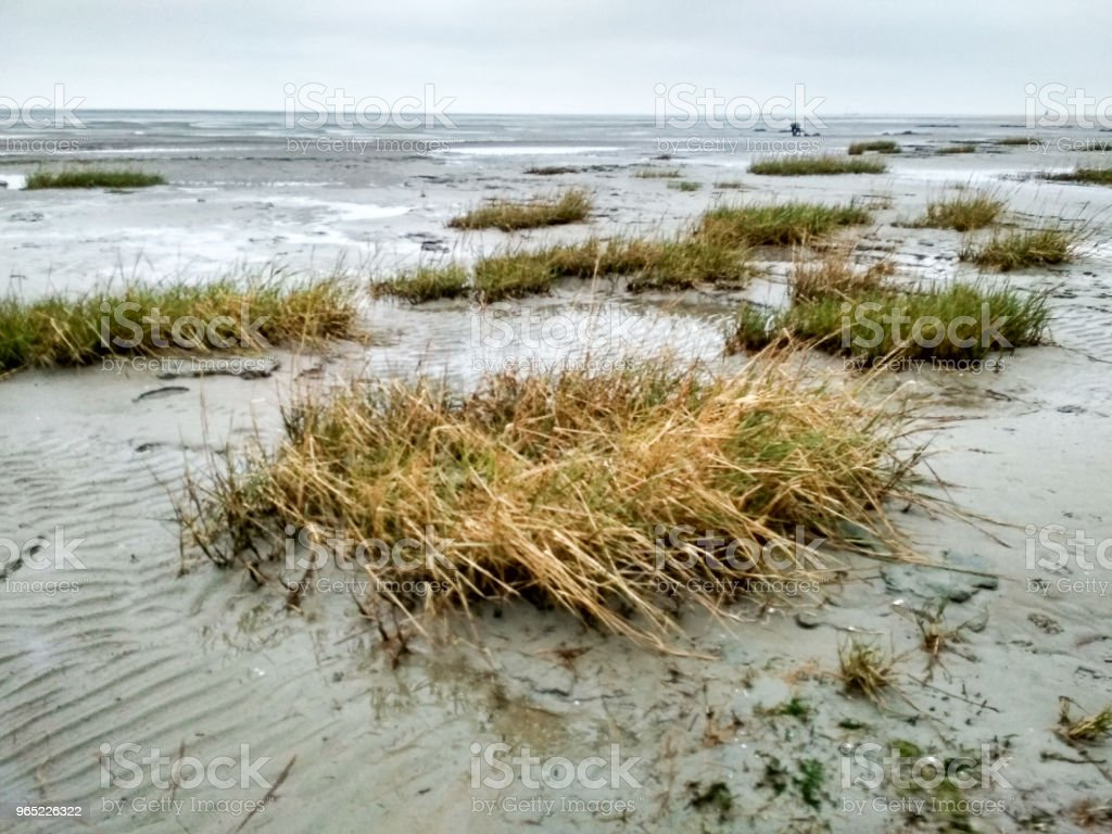 Mudflat - World Heritage - natural site in Schillig royalty-free stock photo
