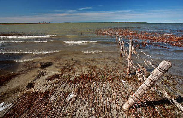 mudflats along Lake Manitoba shore stock photo