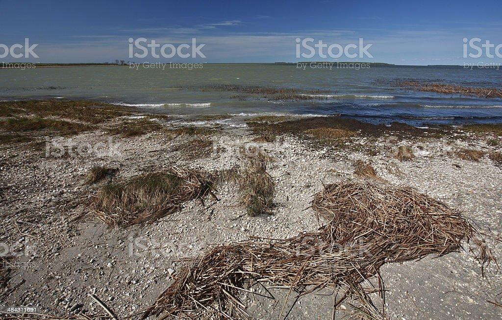 mudflats along Lake Manitoba shore stock photo