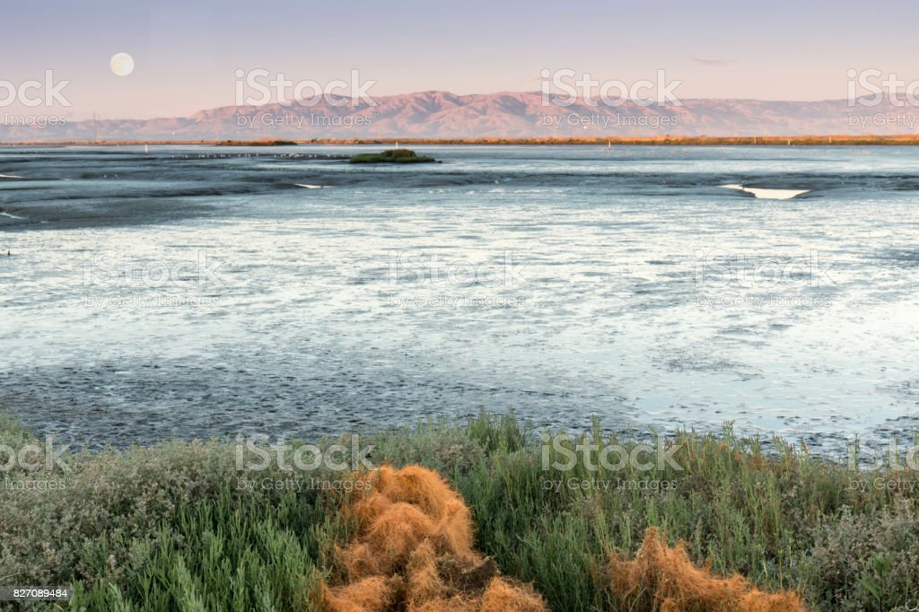 Mudflats of San Francisco Bay with full moon over Diablo Range. stock photo