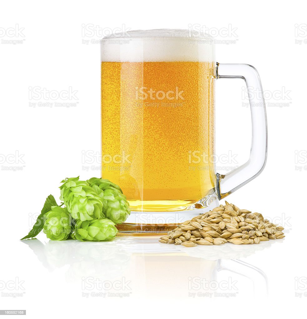 Mug fresh beer with Green hops and wheat isolated stock photo