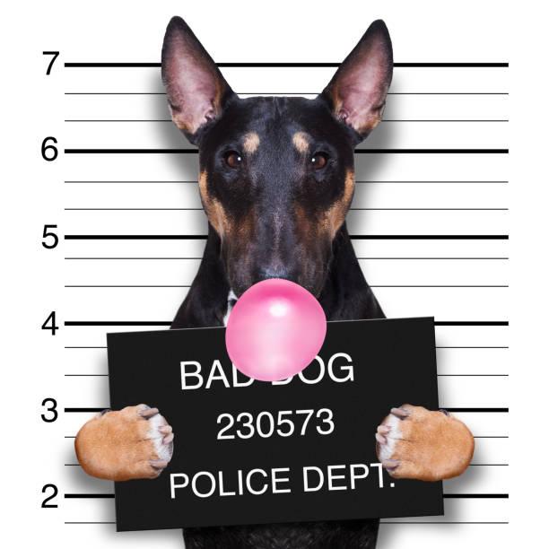 mugshot dog at police station stock photo