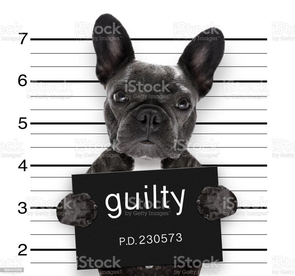 Mugshot Hund auf Polizeistation – Foto