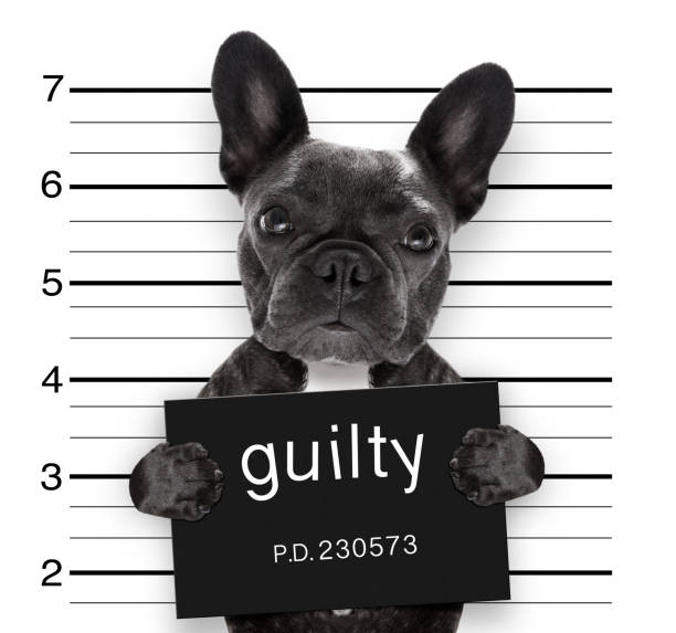 mugshot dog at police station stock photo