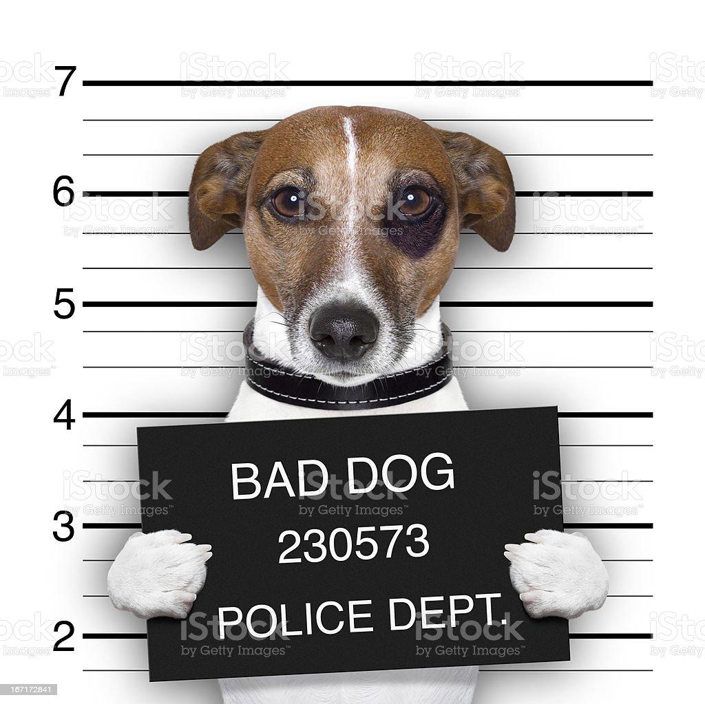 mugshot dog royalty-free stock photo